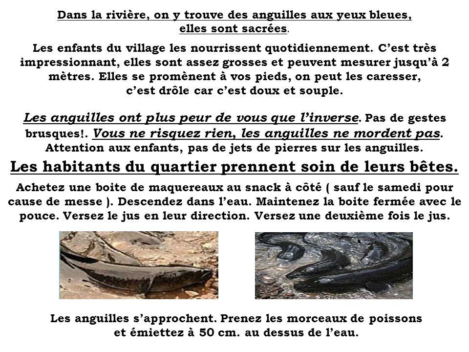 Dans la rivière, on y trouve des anguilles aux yeux bleues, elles sont sacrées. Les enfants du village les nourrissent quotidiennement. Cest très impr