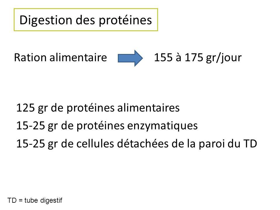 Digestion des protéines Ration alimentaire155 à 175 gr/jour 125 gr de protéines alimentaires 15-25 gr de protéines enzymatiques 15-25 gr de cellules d