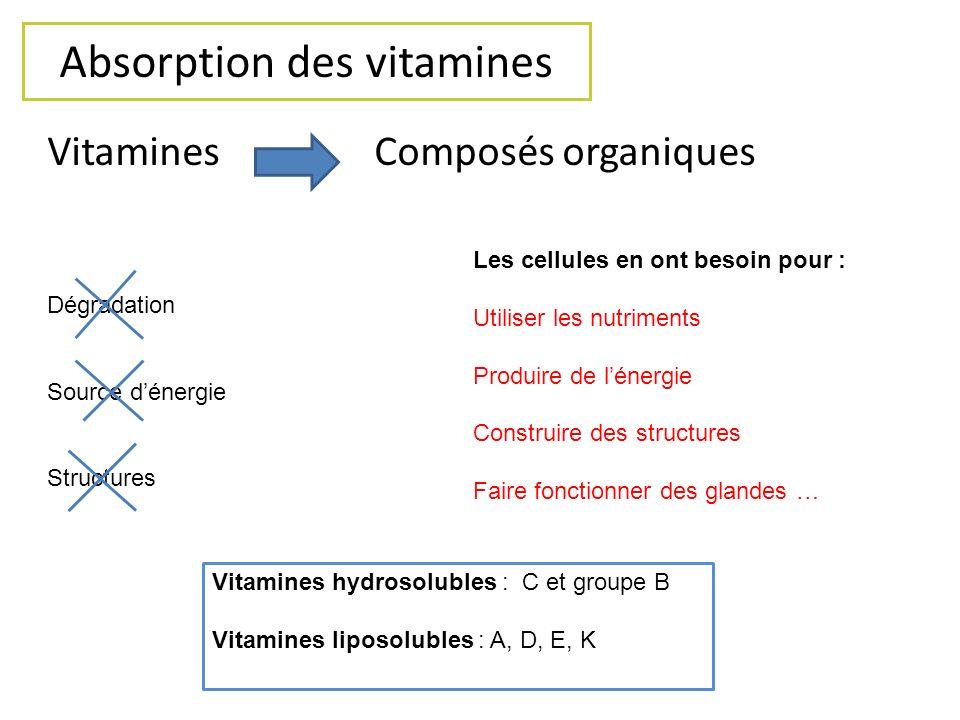 Absorption des vitamines Vitamines Composés organiques Dégradation Source dénergie Structures Les cellules en ont besoin pour : Utiliser les nutriment