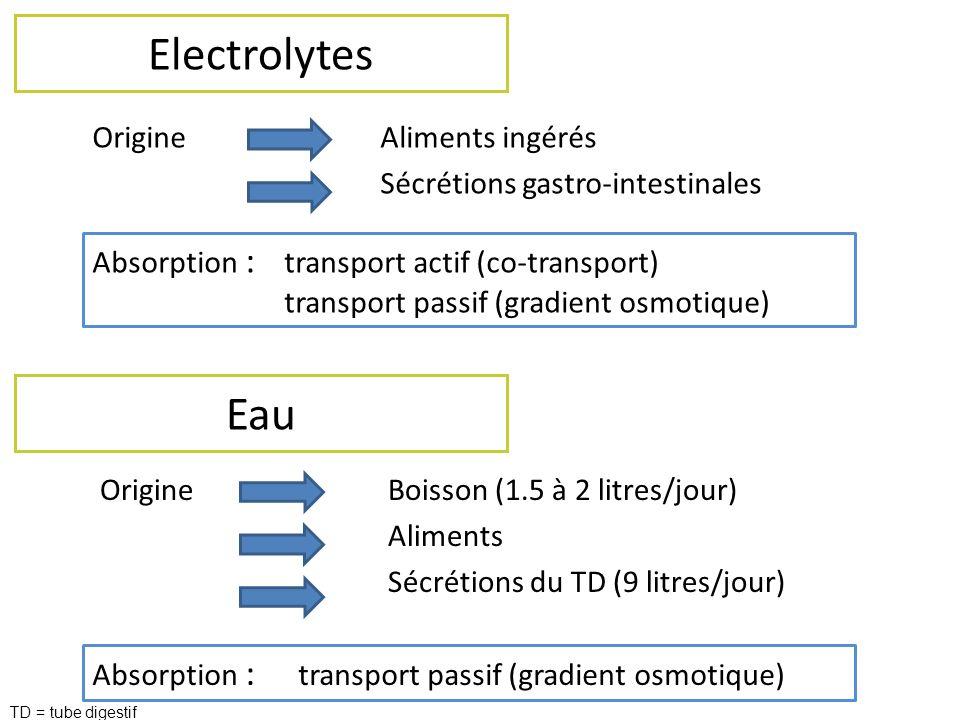 Electrolytes OrigineAliments ingérés Sécrétions gastro-intestinales Eau OrigineBoisson (1.5 à 2 litres/jour) Aliments Sécrétions du TD (9 litres/jour)