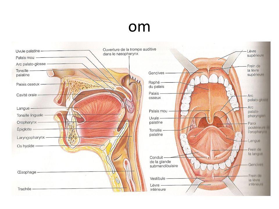 Structure anatomique du pancréas et organes connexes Pancreas