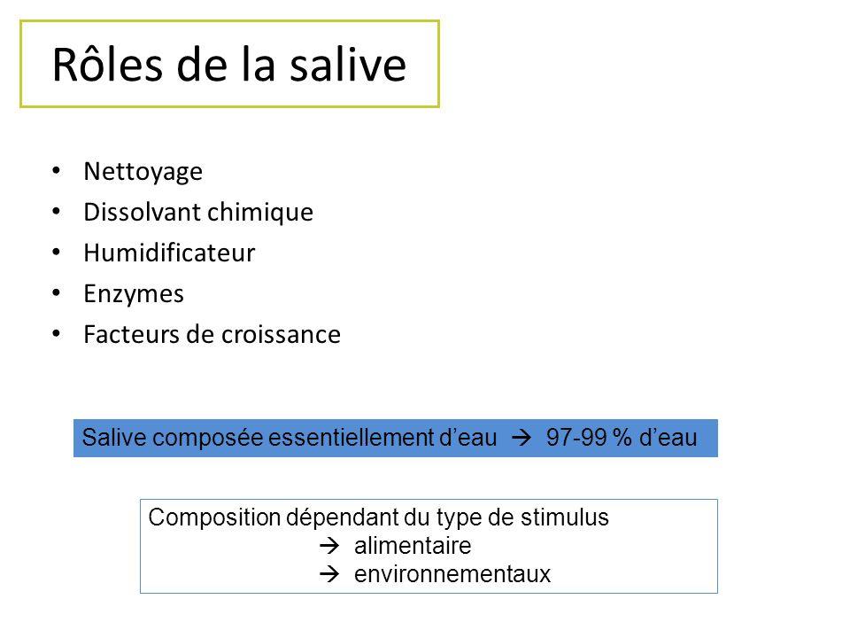 Histologie des glandes salivaires Glandes tubulo-acineuses composées PAROTIDES cellules sereuses SOUSMAXILLAIRES SUBLINGUALES cellules sereuses et ACCESOIRES muqueuses