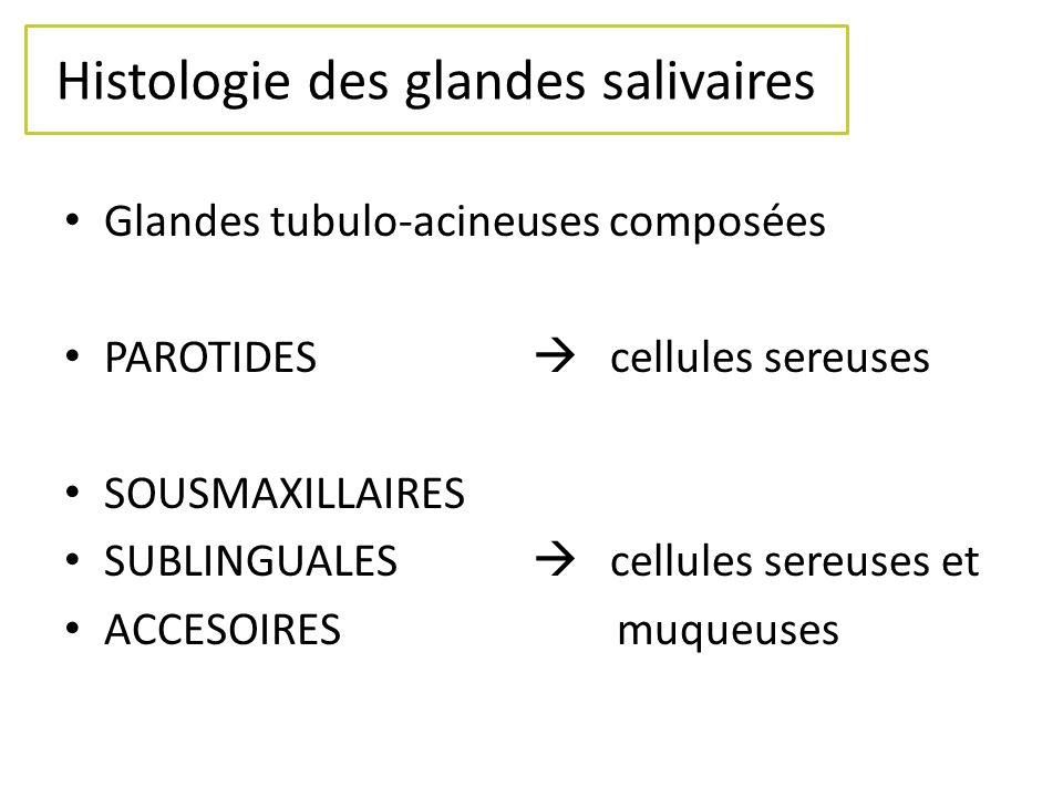 Histologie des glandes salivaires Glandes tubulo-acineuses composées PAROTIDES cellules sereuses SOUSMAXILLAIRES SUBLINGUALES cellules sereuses et ACC