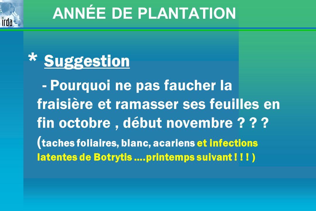 ANNÉE DE PLANTATION * Suggestion - Pourquoi ne pas faucher la fraisière et ramasser ses feuilles en fin octobre, début novembre ? ? ? ( taches foliair