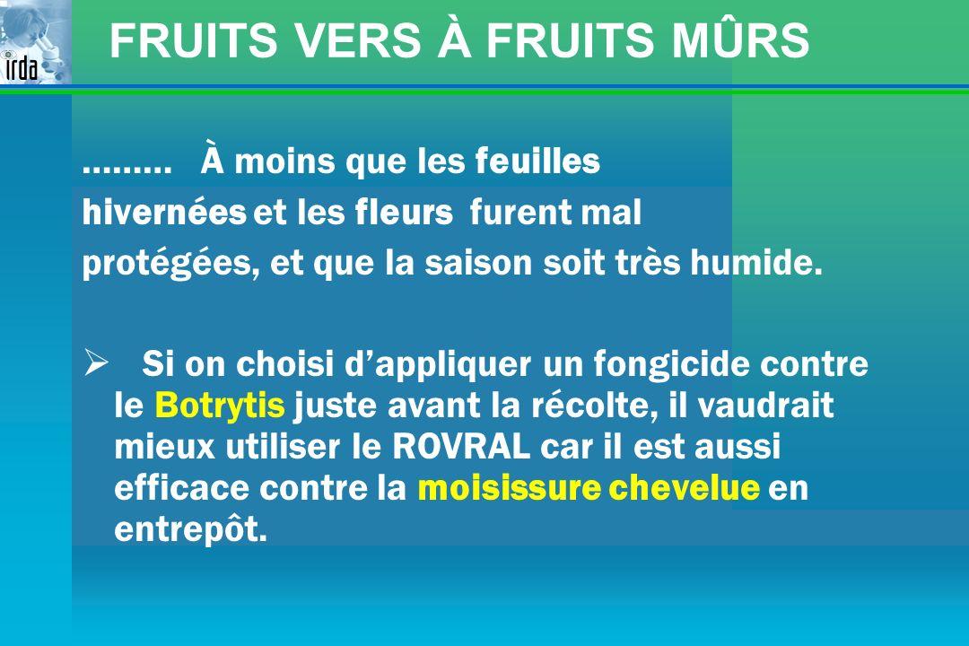 FRUITS VERS À FRUITS MÛRS ……… À moins que les feuilles hivernées et les fleurs furent mal protégées, et que la saison soit très humide. Si on choisi d
