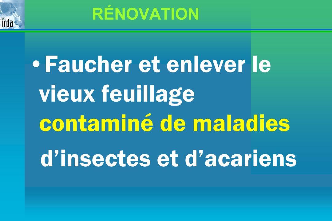 RÉNOVATION Faucher et enlever le vieux feuillage contaminé de maladies dinsectes et dacariens