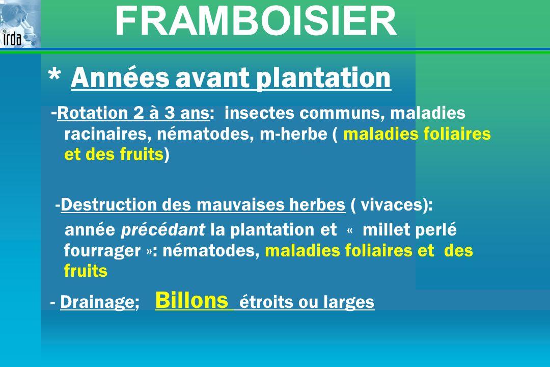 FRAMBOISIER * Années avant plantation - Rotation 2 à 3 ans: insectes communs, maladies racinaires, nématodes, m-herbe ( maladies foliaires et des frui