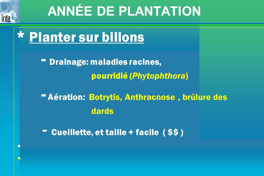 ANNÉE DE PLANTATION * Planter sur billons - Drainage: maladies racines, pourridié (Phytophthora) - Aération: Botrytis, Anthracnose, brûlure des dards