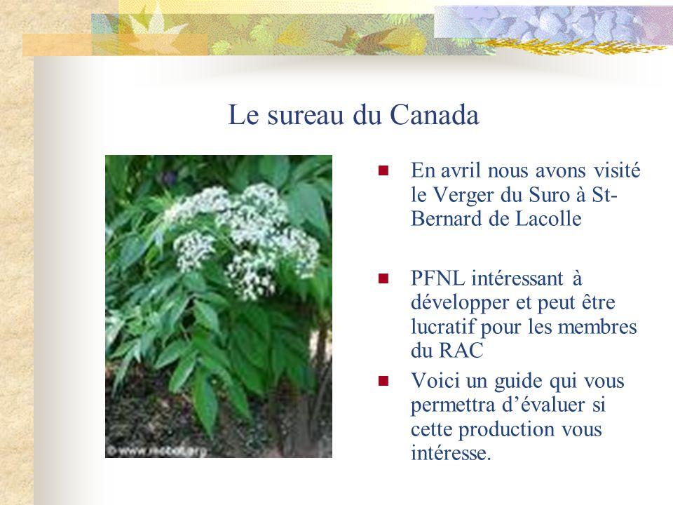 Le sureau du Canada En avril nous avons visité le Verger du Suro à St- Bernard de Lacolle PFNL intéressant à développer et peut être lucratif pour les