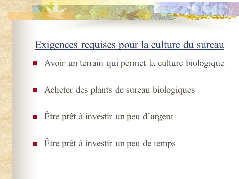 Exigences requises pour la culture du sureau Avoir un terrain qui permet la culture biologique Acheter des plants de sureau biologiques Être prêt à in