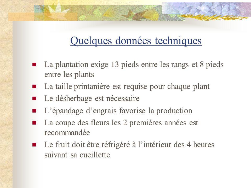 Quelques données techniques La plantation exige 13 pieds entre les rangs et 8 pieds entre les plants La taille printanière est requise pour chaque pla