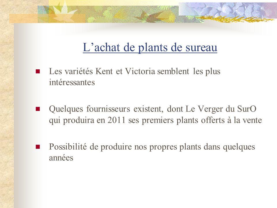 Lachat de plants de sureau Les variétés Kent et Victoria semblent les plus intéressantes Quelques fournisseurs existent, dont Le Verger du SurO qui pr