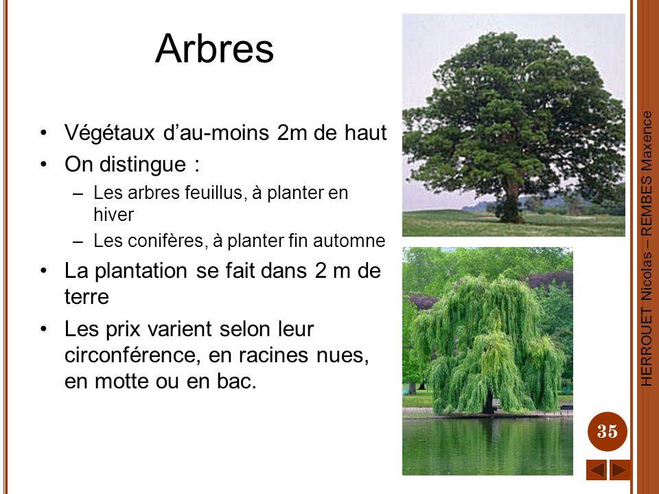 HERROUET Nicolas – REMBES Maxence 35 Arbres Végétaux dau-moins 2m de haut On distingue : –Les arbres feuillus, à planter en hiver –Les conifères, à pl