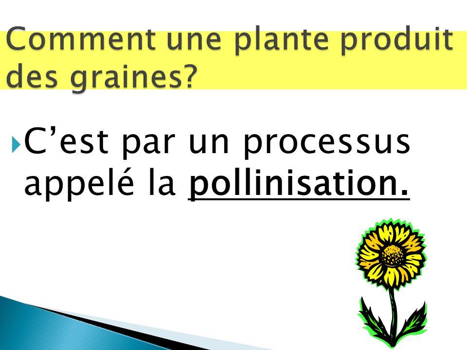 Cest par un processus appelé la pollinisation.