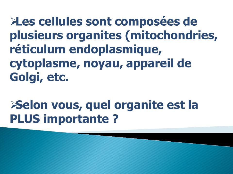 Les cellules sont composées de plusieurs organites (mitochondries, réticulum endoplasmique, cytoplasme, noyau, appareil de Golgi, etc. Selon vous, que