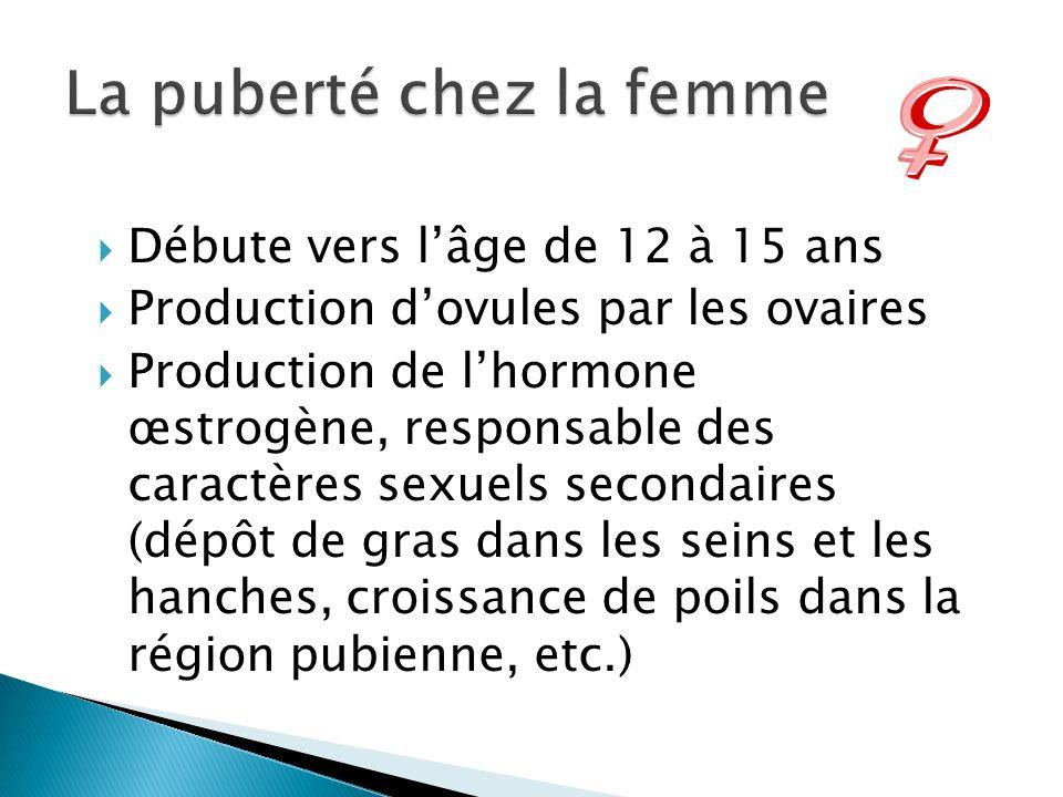 Débute vers lâge de 12 à 15 ans Production dovules par les ovaires Production de lhormone œstrogène, responsable des caractères sexuels secondaires (d
