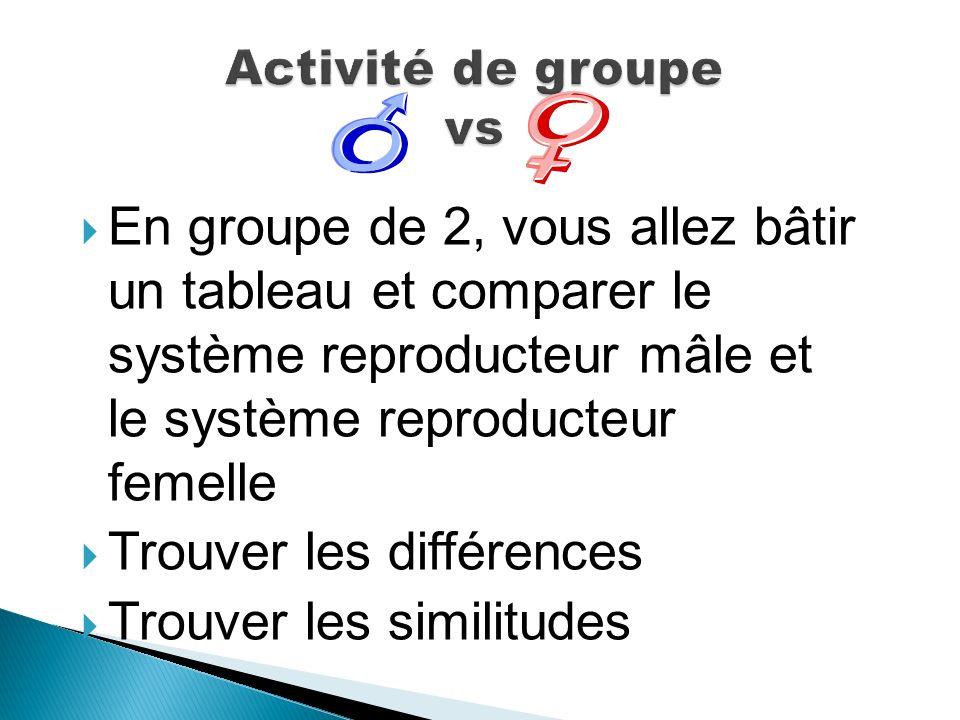 En groupe de 2, vous allez bâtir un tableau et comparer le système reproducteur mâle et le système reproducteur femelle Trouver les différences Trouve