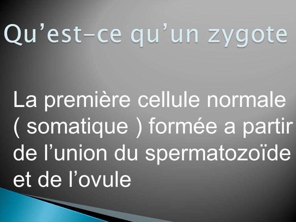 La première cellule normale ( somatique ) formée a partir de lunion du spermatozoïde et de lovule