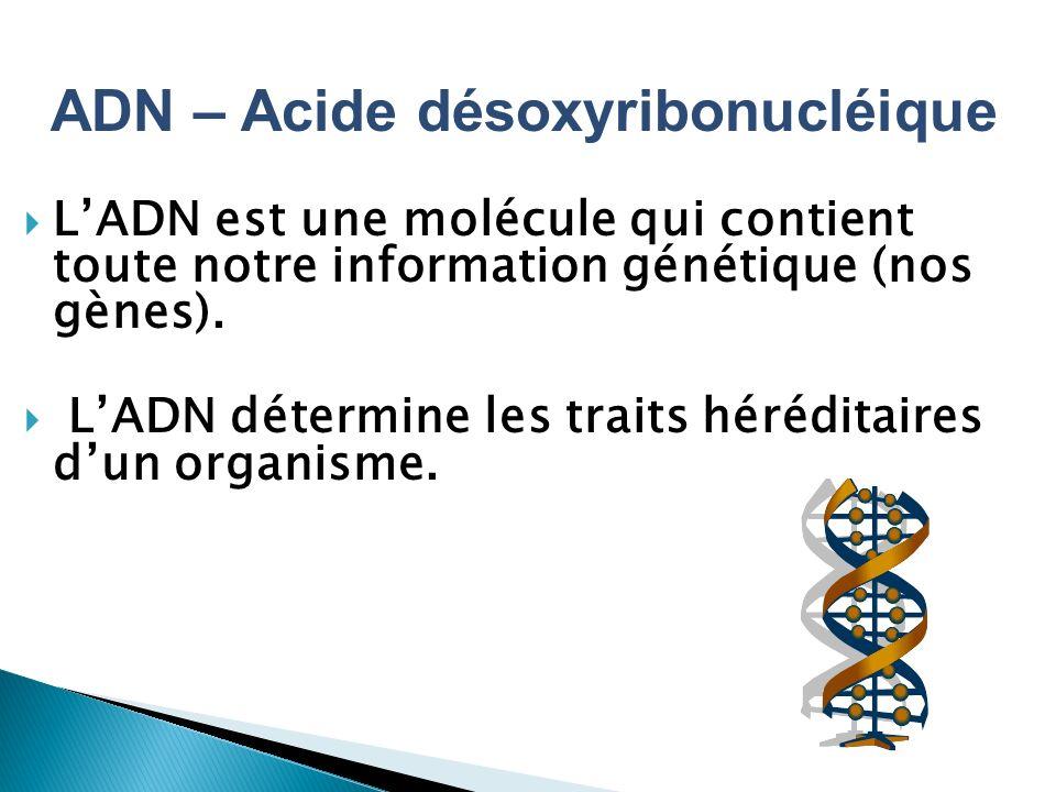 ADN – Acide désoxyribonucléique LADN est une molécule qui contient toute notre information génétique (nos gènes). LADN détermine les traits héréditair
