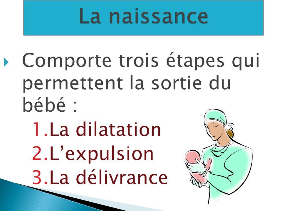 Comporte trois étapes qui permettent la sortie du bébé : 1.La dilatation 2.Lexpulsion 3.La délivrance