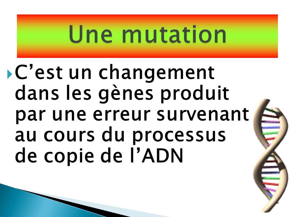 Cest un changement dans les gènes produit par une erreur survenant au cours du processus de copie de lADN