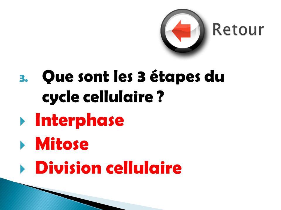 3. Que sont les 3 étapes du cycle cellulaire ? Interphase Mitose Division cellulaire