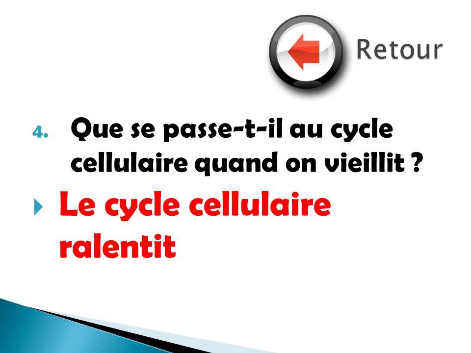 4. Que se passe-t-il au cycle cellulaire quand on vieillit ? Le cycle cellulaire ralentit