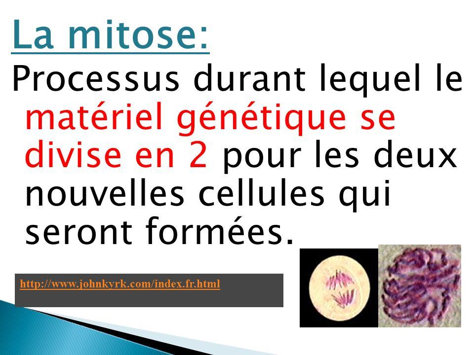 La mitose: Processus durant lequel le matériel génétique se divise en 2 pour les deux nouvelles cellules qui seront formées. http://www.johnkyrk.com/i