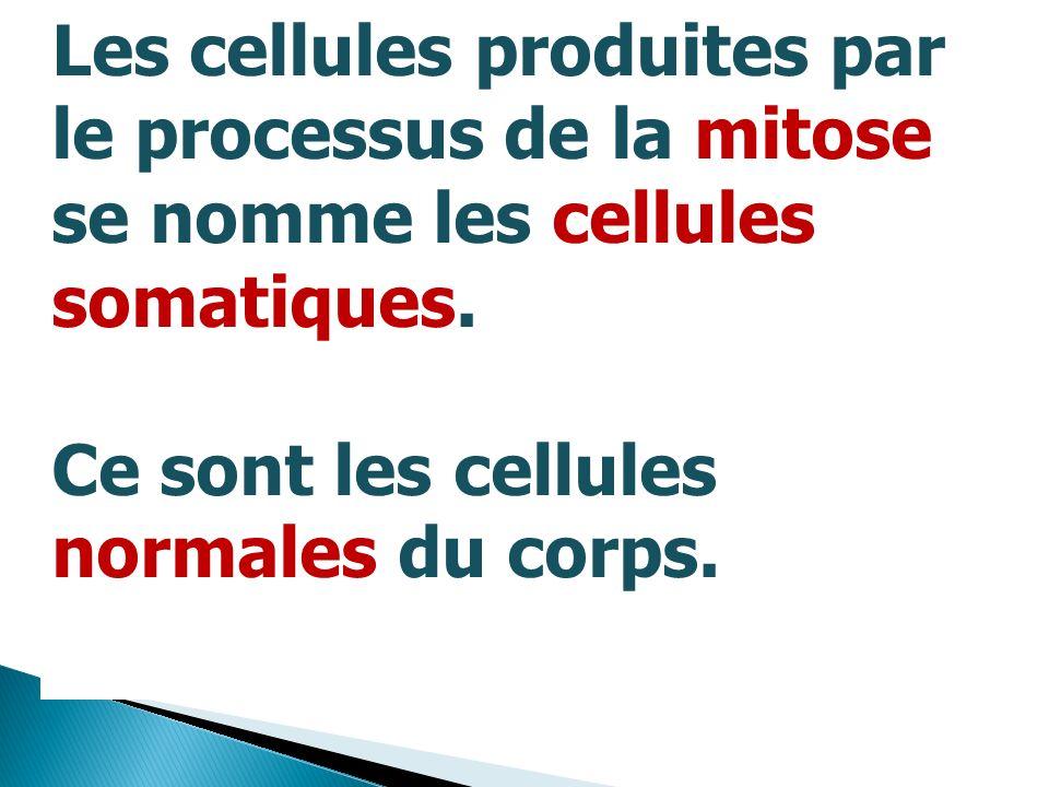 Les cellules produites par le processus de la mitose se nomme les cellules somatiques. Ce sont les cellules normales du corps.