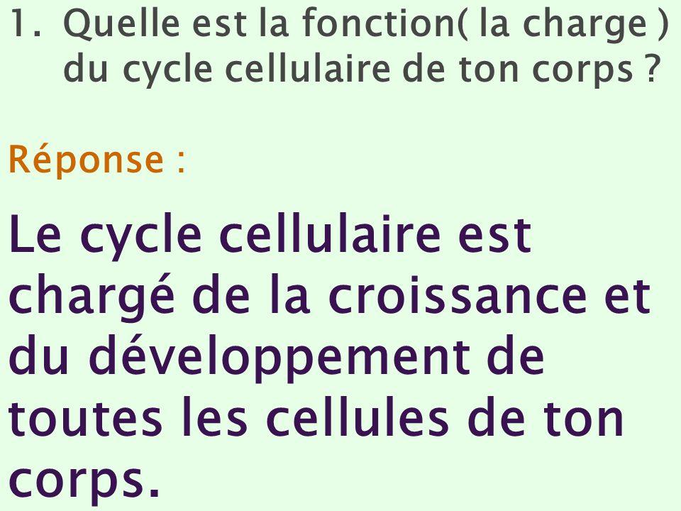 1.Quelle est la fonction( la charge ) du cycle cellulaire de ton corps ? Réponse : Le cycle cellulaire est chargé de la croissance et du développement
