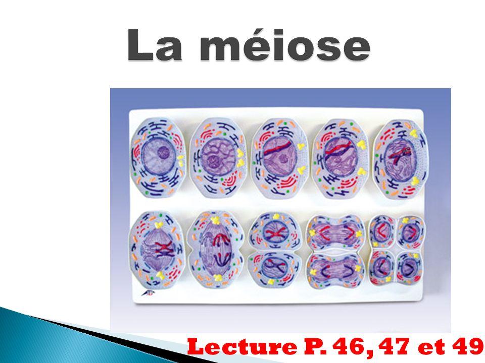 Lecture P. 46, 47 et 49