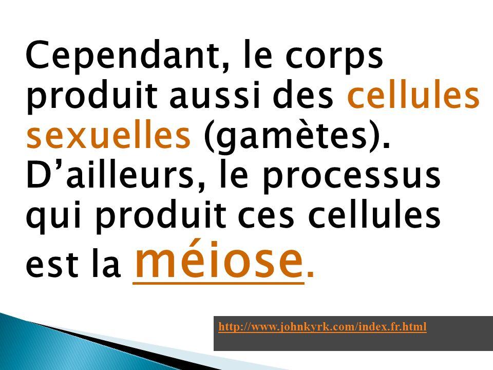 Cependant, le corps produit aussi des cellules sexuelles (gamètes). Dailleurs, le processus qui produit ces cellules est la méiose. http://www.johnkyr