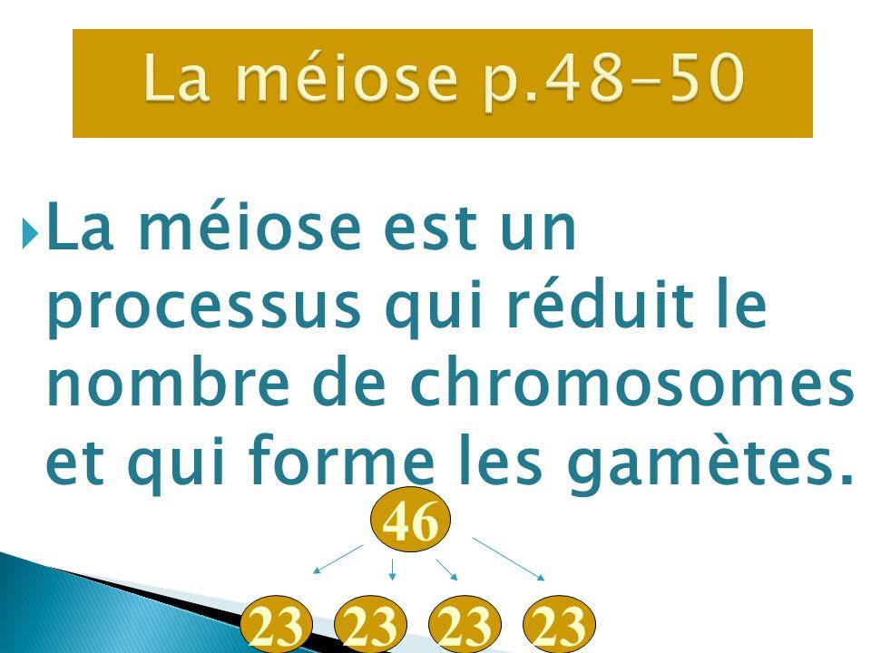 La méiose est un processus qui réduit le nombre de chromosomes et qui forme les gamètes. 46 23