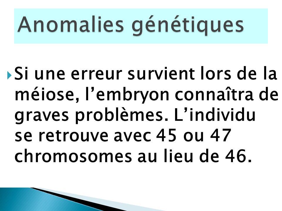 Si une erreur survient lors de la méiose, lembryon connaîtra de graves problèmes. Lindividu se retrouve avec 45 ou 47 chromosomes au lieu de 46.