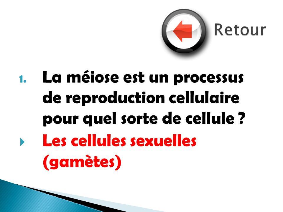 1. La méiose est un processus de reproduction cellulaire pour quel sorte de cellule ? Les cellules sexuelles (gamètes)