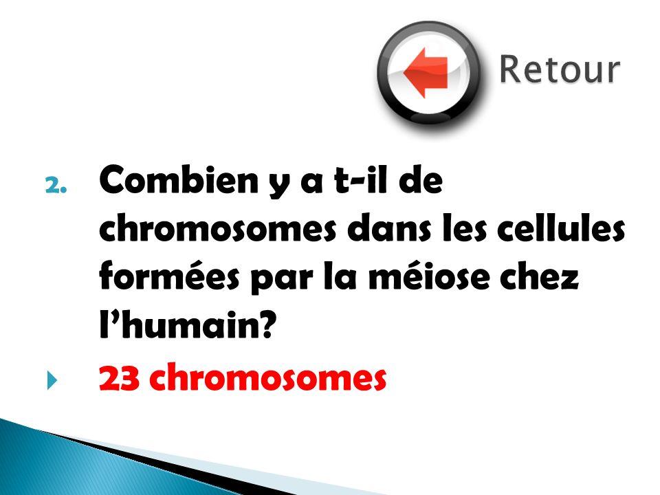 2. Combien y a t-il de chromosomes dans les cellules formées par la méiose chez lhumain? 23 chromosomes