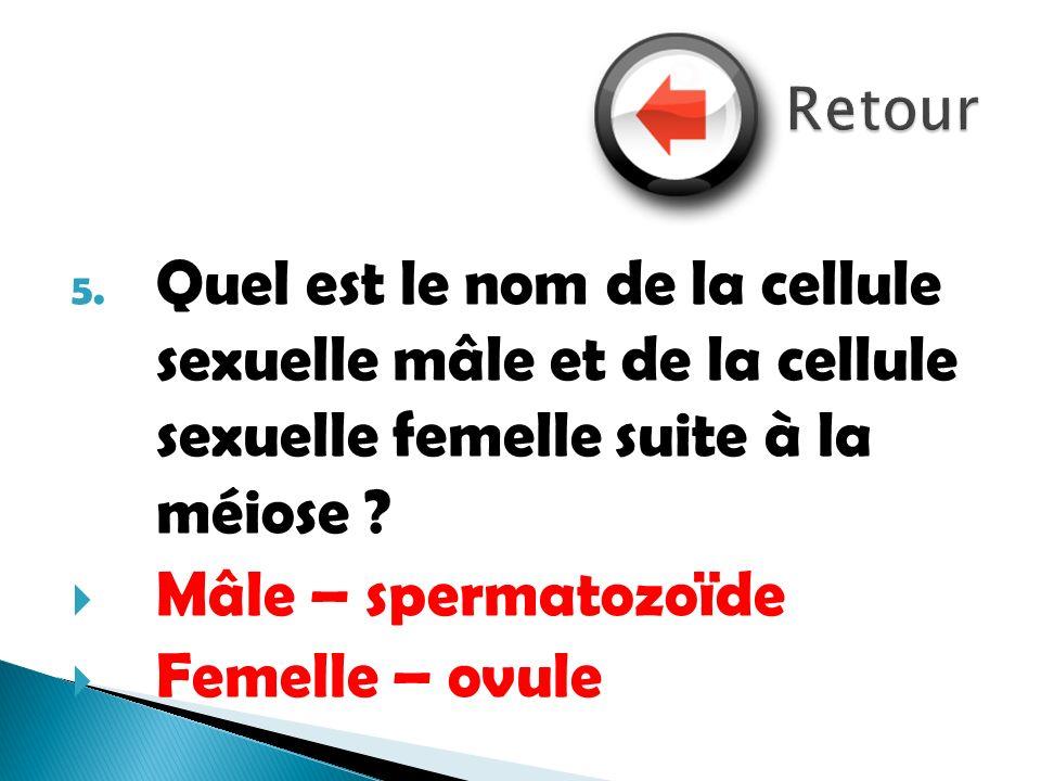 5. Quel est le nom de la cellule sexuelle mâle et de la cellule sexuelle femelle suite à la méiose ? Mâle – spermatozoïde Femelle – ovule