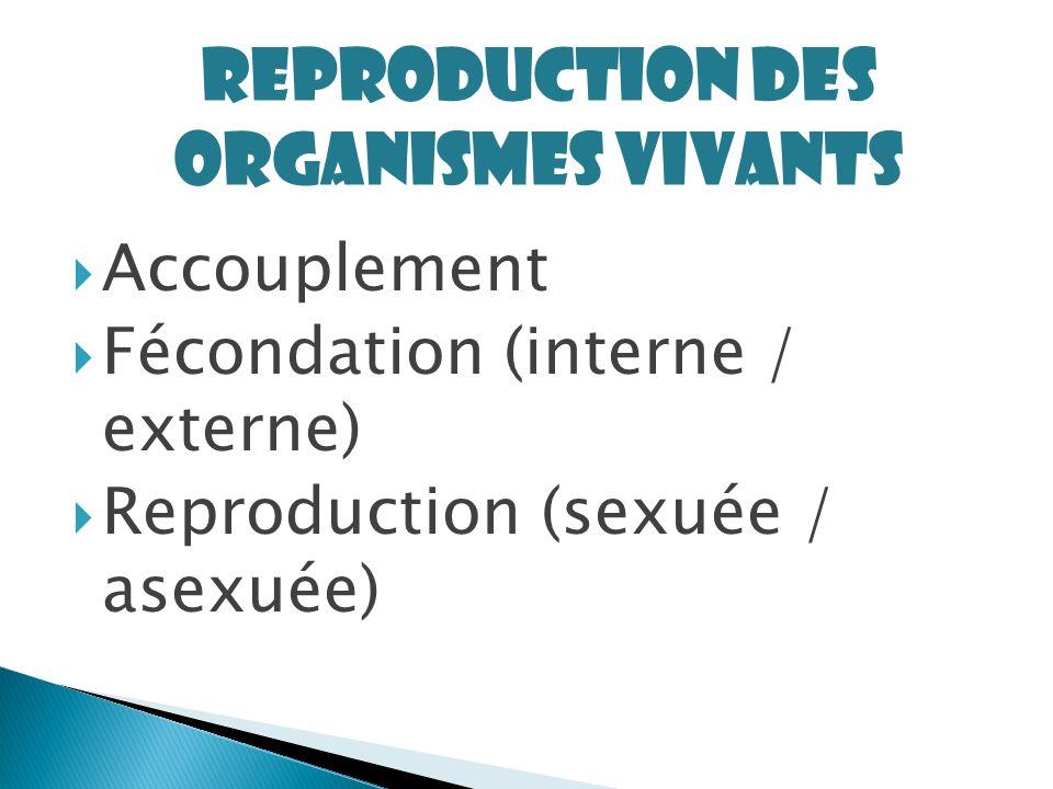 Accouplement Fécondation (interne / externe) Reproduction (sexuée / asexuée) Reproduction des organismes vivants