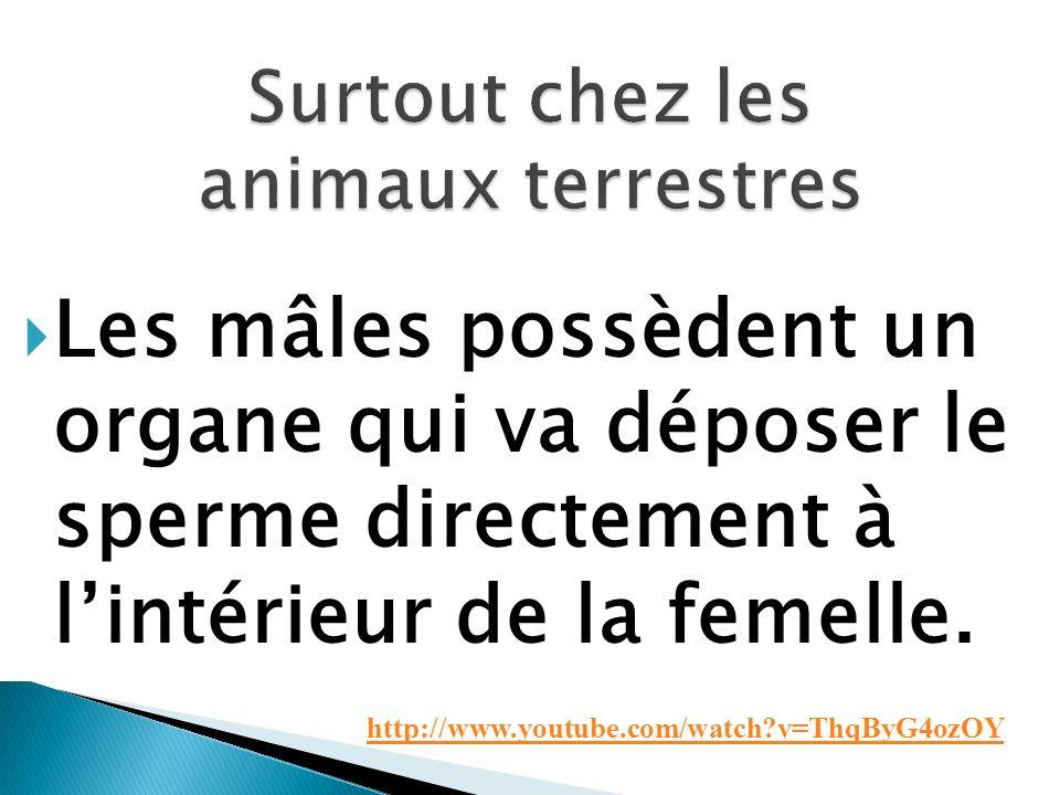 Les mâles possèdent un organe qui va déposer le sperme directement à lintérieur de la femelle. http://www.youtube.com/watch?v=ThqByG4ozOY