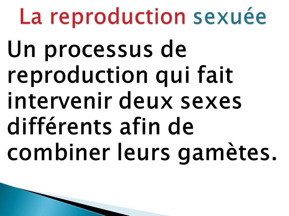 Un processus de reproduction qui fait intervenir deux sexes différents afin de combiner leurs gamètes.