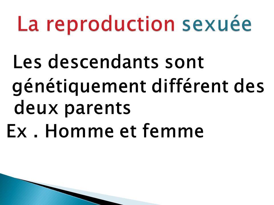 Les descendants sont génétiquement différent des deux parents Ex. Homme et femme