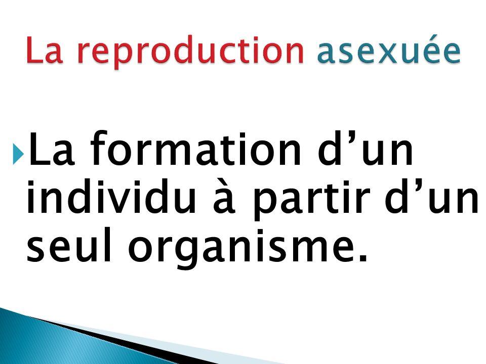 La formation dun individu à partir dun seul organisme.