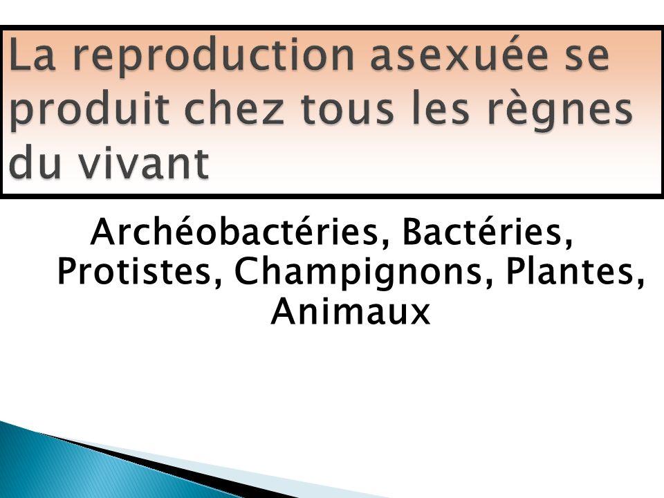 Archéobactéries, Bactéries, Protistes, Champignons, Plantes, Animaux