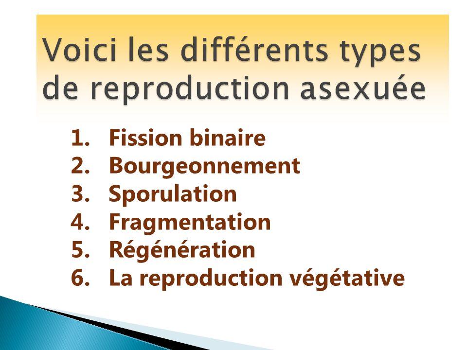 1.Fission binaire 2.Bourgeonnement 3.Sporulation 4.Fragmentation 5.Régénération 6.La reproduction végétative