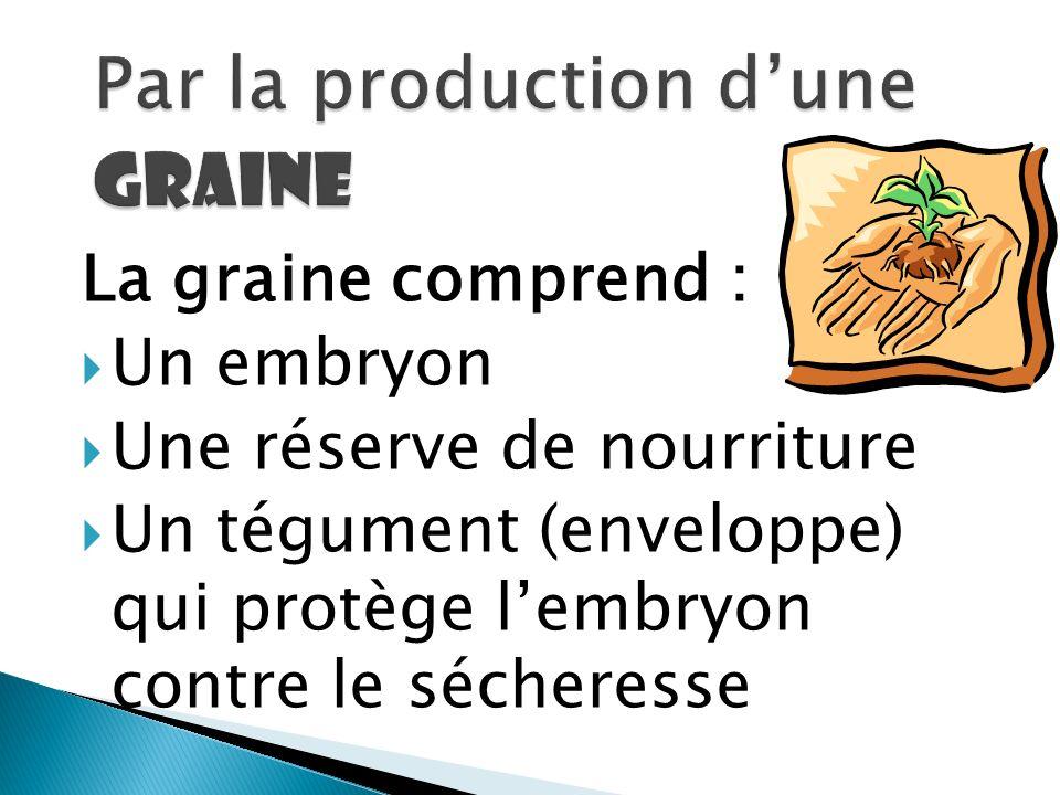 La graine comprend : Un embryon Une réserve de nourriture Un tégument (enveloppe) qui protège lembryon contre le sécheresse