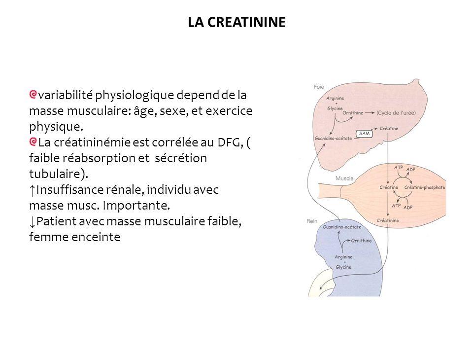 LA CREATININE variabilité physiologique depend de la masse musculaire: âge, sexe, et exercice physique. La créatininémie est corrélée au DFG, ( faible