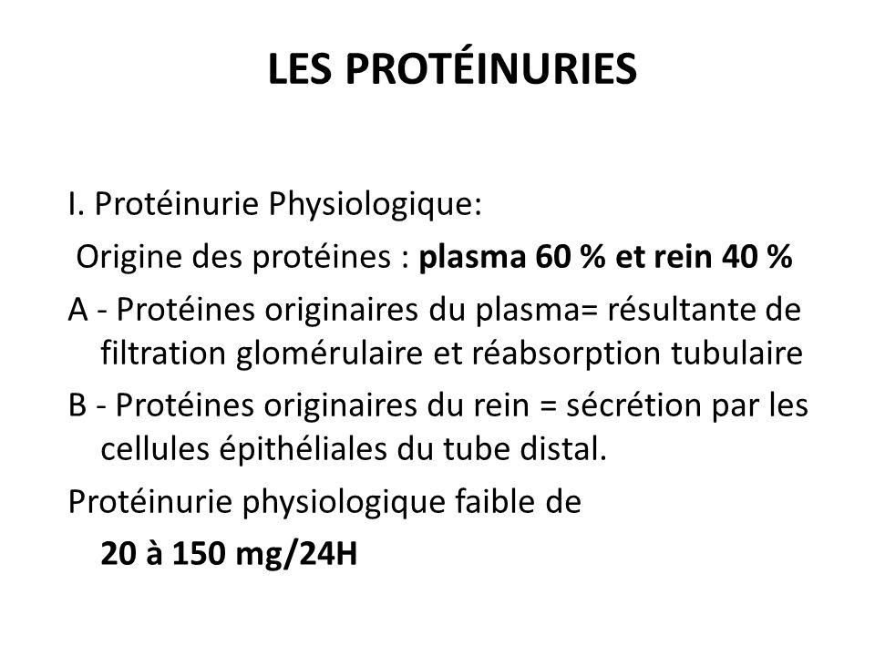 I. Protéinurie Physiologique: Origine des protéines : plasma 60 % et rein 40 % A - Protéines originaires du plasma= résultante de filtration glomérula