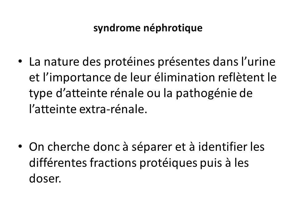 La nature des protéines présentes dans lurine et limportance de leur élimination reflètent le type datteinte rénale ou la pathogénie de latteinte extr