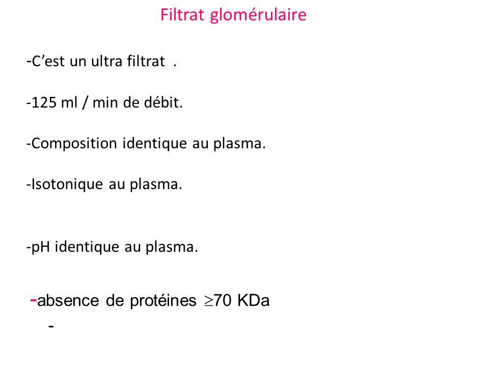 - absence de protéines 70 KDa - Filtrat glomérulaire - Cest un ultra filtrat. -125 ml / min de débit. -Composition identique au plasma. -Isotonique au