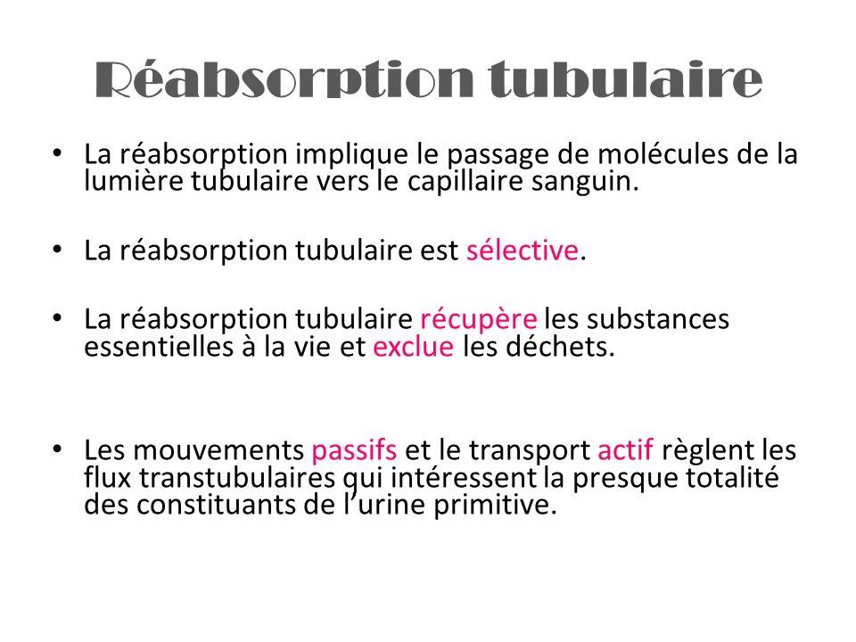Réabsorption tubulaire La réabsorption implique le passage de molécules de la lumière tubulaire vers le capillaire sanguin. La réabsorption tubulaire